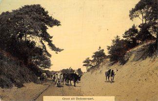 Ansichtkaart Beerze Dedemsvaart Groeten uit 1911 Kudde koeien HC1141
