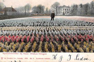 Ansichtkaart Hillegom Hyacintenvelden bij Huize Wildlust 1905 Tram HC1383