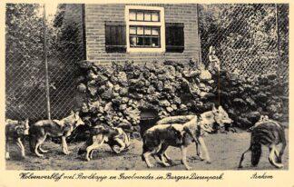 Ansichtkaart Arnhem Wolvenverblijf met Roodkapje en Grootmoeder in Burgers Dierenpark Zoo HC1452