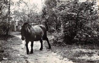 Ansichtkaart Ermelo Paard op het Bungalow- en Vakantieverblijf De Veluwe Zeeweg 37 HC1485