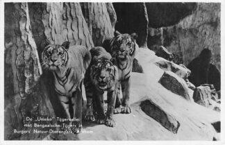 Ansichtkaart Arnhem Tijgervallei met Bengaalsche Tijgers in Burgers Dierenpark Zoo 1942 HC399