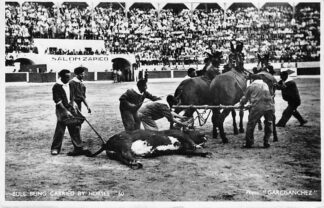 Ansichtkaart Gibraltar Bull Being Carried by horses Bull fight Stieren gevecht Spanje Europa HC885