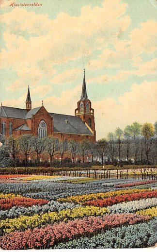 Ansichtkaart Lisse Hiacintenvelden met kerk 1912 HC932