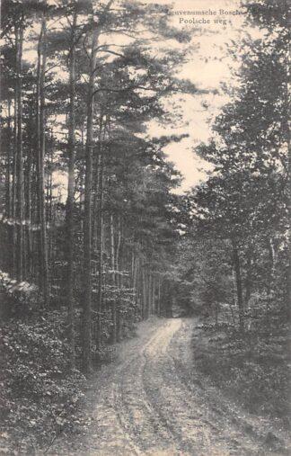 Ansichtkaart Harderwijk Ermelo Leuvenumsche Bosch Poolsche weg 1916 HC1684