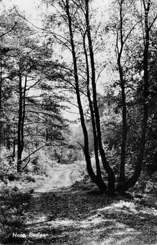 Ansichtkaart Norg Boslaan 1959 HC1790