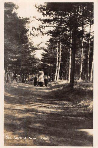 Ansichtkaart Ameland Nes Nesser Bossen 1949 HC1855
