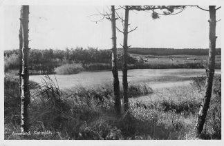 Ansichtkaart Ameland 1951 Katteplas HC1886