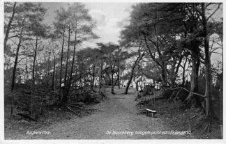 Ansichtkaart Appelscha 1934 De Boschberg hoogste punt van Friesland Reclame Duinen-Zathe HC1888