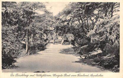 Ansichtkaart Appelscha 1938 De Boschberg met Uitkijktoren Hoogste Punt van Friesland HC1889