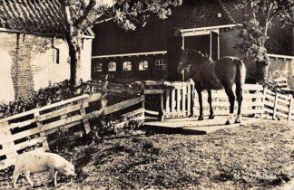Ansichtkaart Friesland Boerenerf met varken en paard Mooie Friesland HC1904
