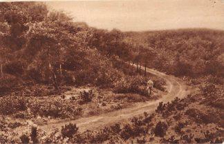 Ansichtkaart Bergen (NH) De Staringsweg in de duinen tusschen Bergen en Schoorl 1926 HC2110