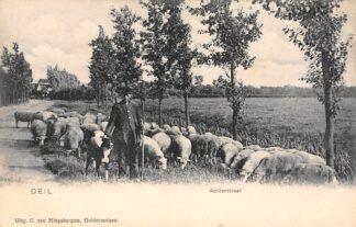 Ansichtkaart Deil Geldermalsen Achterstraat Schaapherder hond en kudde schapen HC2153