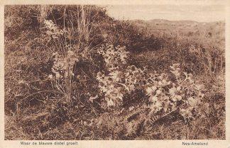 Ansichtkaart Ameland Nes 1932 Waar de blauwe distel groeit HC2163