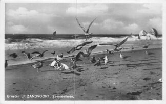 Ansichtkaart Zandvoort Groeten uit   Zeemeeuwen HC2313