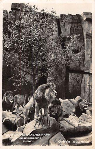 Ansichtkaart Rhenen Ouwehand's Dierenpark Gedeelte Leeuwen terras dieren 1947 HC2496