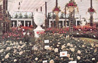 Ansichtkaart Boskoop Boskoopsche Rozententoonstelling HC2640