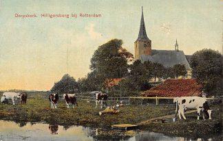 Ansichtkaart Rotterdam Hillegersberg Dorpskerk en koeien in de wei 1906 HC2999