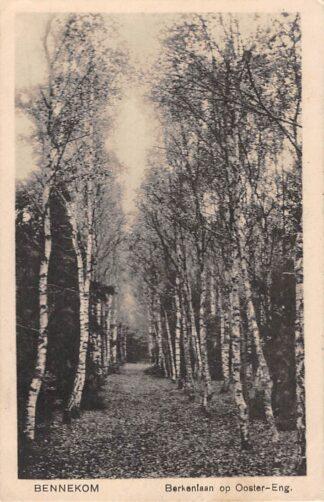 Ansichtkaart Bennekom Berkenlaan op Ooster-Eng 1925 HC3408