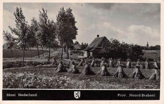 Ansichtkaart Noord-Brabant Dorpsleven Mooi Nederland Brabants Landschap 1950 HC3523