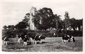 Ansichtkaart Oostermeer Oude Toren met koeien 1947 HC4327