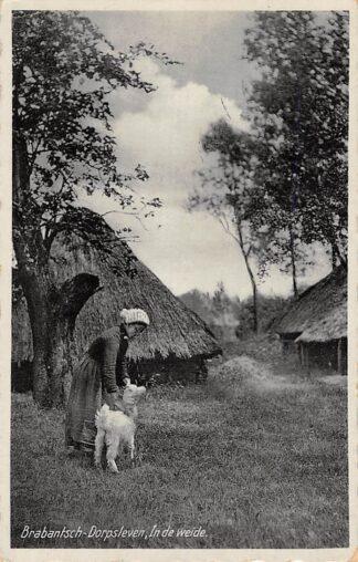Ansichtkaart Noord-Brabant Dorpsleven In de weide Klederdracht Gemert 1929 HC4528