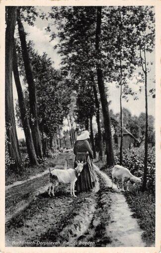 Ansichtkaart Noord-Brabant Brabantsch Dorpsleven Geitjes hoeden Klederdracht HC4535