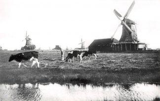 Ansichtkaart Westzaan Kalverringdijk Oliemolen De Os Molen HC4575