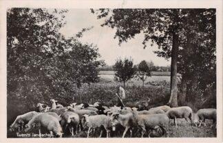 Ansichtkaart Rijssen Twents Landschap met schaapherder en schaapskudde HC4636