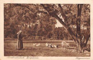 Ansichtkaart Noord-Brabant Dorpsleven Kippen voeren 1916 Klederdracht HC5267