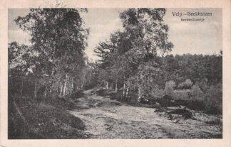 Ansichtkaart Velp - Beekhuizen Berkenlaantje 1920 HC5460
