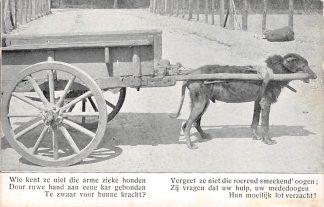 Ansichtkaart 's-Gravenhage Aanklacht tegen trekhonden hondenkar HC5608
