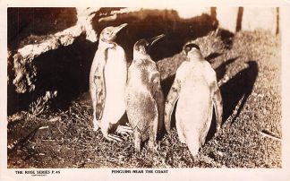 Ansichtkaart Fremantle Australia Penguins naer the coast 1932 Australië Dieren HC5908