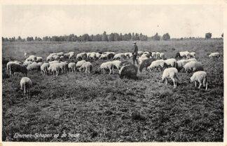 Ansichtkaart Emmen Schapen op de heide met herder HC6074