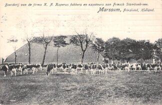 Ansichtkaart Marssum Boederij van de Firma K.N. Kuperus fokkers en exporteurs van Friesch Stamboek-vee Leeuwarden HC6240
