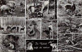 Ansichtkaart Uddel In Uddel leeft de natuur 1963 Dieren in het bos Veluwe HC6358