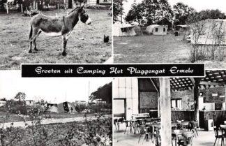Ansichtkaart Ermelo Groeten uit Camping Het Plaggengat Hosterenweg 17 HC6375
