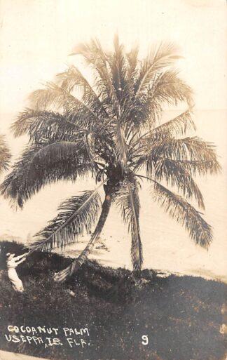 Ansichtkaart Verenigde Staten USA Useppa Island Fotokaart 1919 Cocoanut Palm Noord-Amerika HC7328
