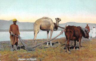 Ansichtkaart Egypte Blanteur en Egypte Boer met ploeg en os en kameel Egypt Afrika HC7402