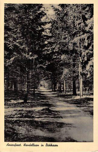Ansichtkaart Amersfoort Wandellaan in Birkhoven 1941 HC7591