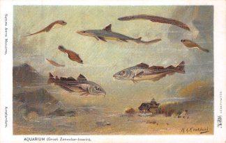 Ansichtkaart Amsterdam Artis Aquarium Groot Zeewaterbassin Vissen Dierentuin Zoo Illustrator M.A. Koekkoek Dieren HC8238