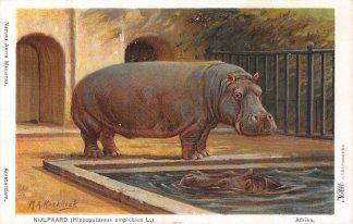 Ansichtkaart Amsterdam Artis Nijlpaard Hippopotamus amphibius L. Afrika Dierentuin Zoo Illustrator M.A. Koekkoek Dieren HC8240