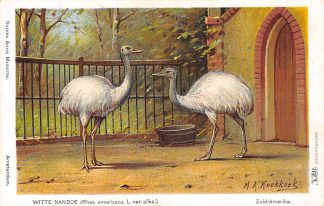Ansichtkaart Amsterdam Artis Witte Nadoe Rhea americans L. var. alba. Dierentuin Zoo Illustrator H. Koekkoek Dieren  HC8241