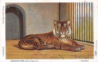Ansichtkaart Amsterdam Artis Koningstijger Uncia Tigris L. Dierentuin Zoo Illustrator H. Koekkoek Dieren HC8242