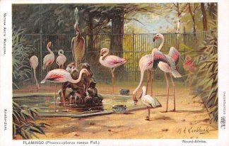 Ansichtkaart Amsterdam Artis Flamingo Phoenicopterus roseus Pall. Noord-Afrika Dierentuin Zoo Illustrator M.A. Koekkoek Dieren HC8245