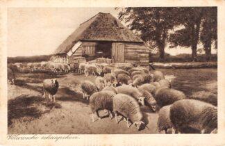 Ansichtkaart Elspeet Veluwe Veluwsche schaapskooi Dieren HC8388