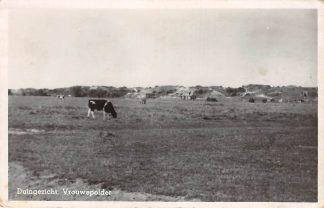 Ansichtkaart Vrouwenpolder Zeeland Duingezicht met grazende koeien in de wei 1949 HC8542