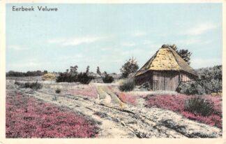 Ansichtkaart Eerbeek Veluwe Heide serie 1954 HC8707