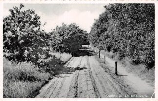 Ansichtkaart Oudemirdum Een der Boswegen 1954 HC8849