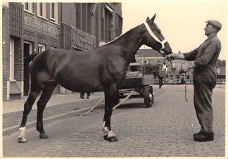 Ansichtkaart Sneek Fotokaart Koopmansgracht Meelfabriek Wouda Keuring van Paard Dieren HC8854