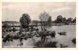 Ansichtkaart Leersum Meeuwenkolonie Leersumse Plassen 1954 HC9284